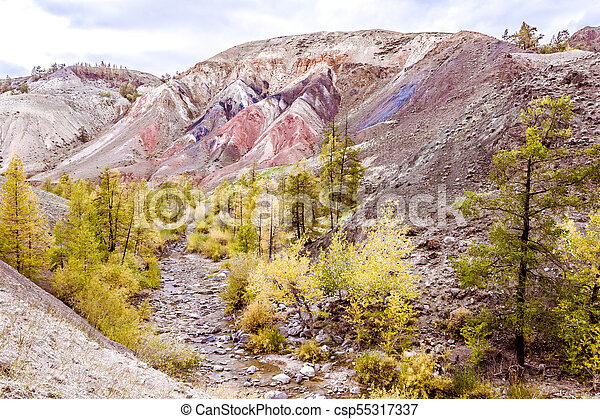 Colorful red rocks with yellow trees. Autumn in the Altai mountains. - csp55317337