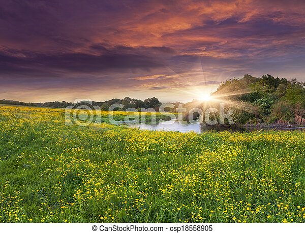 Colorful spring landscape on the siver with field of yellow flowers. Dramatic sunset. - csp18558905