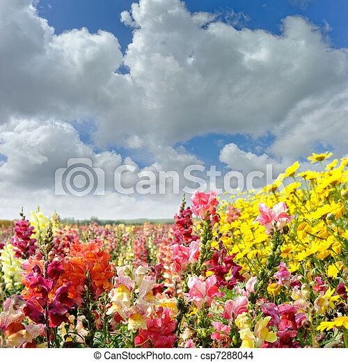 Colorful summer field with flowers - csp7288044
