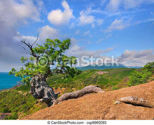 Colorful summer landscape in Crimea - csp9965093
