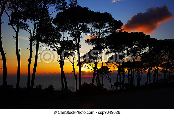 Colorful sunset in the pine forest - csp9049626