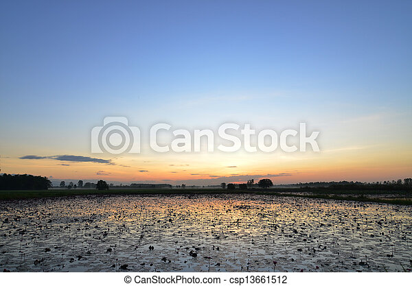 colorful sunset over a wetland, with some wheats in the foreground - csp13661512