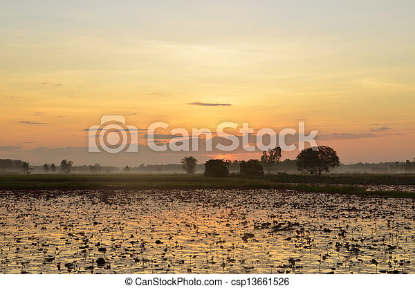 colorful sunset over a wetland, with some wheats in the foreground - csp13661526
