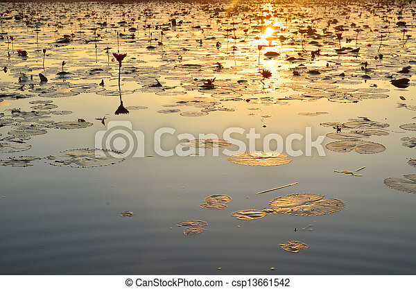 colorful sunset over a wetland, with some wheats in the foreground - csp13661542