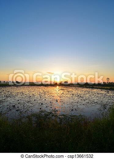 colorful sunset over a wetland, with some wheats in the foreground - csp13661532