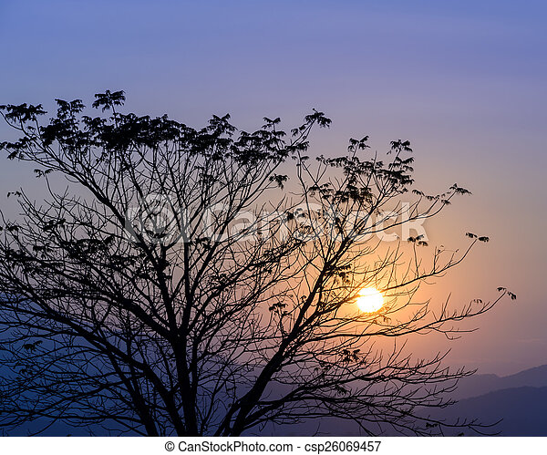 Colorful sunset with silhouette tree - csp26069457