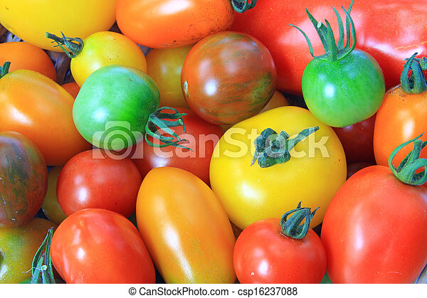 Colorful tomatoes - csp16237088