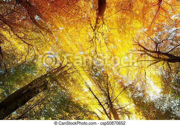 Colorful tree canopy with sunrays in autumn - csp50870652