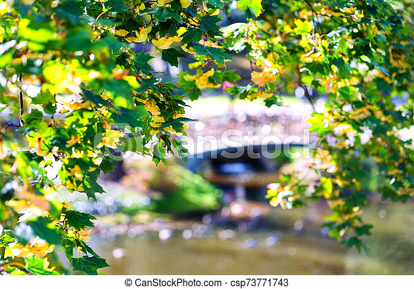 Colorful trees in autumn day - csp73771743
