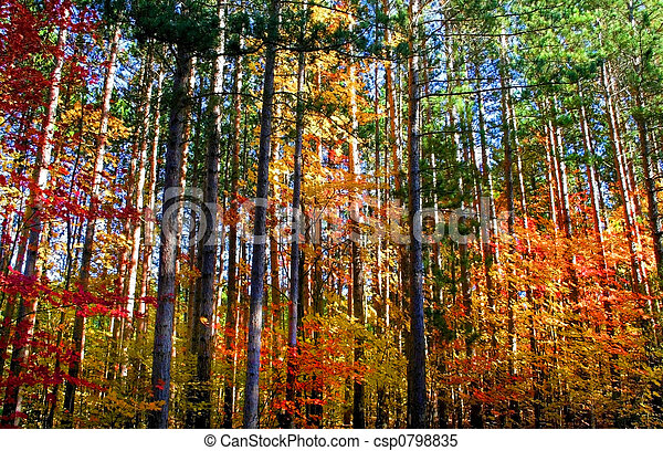 Colorful Trees - csp0798835