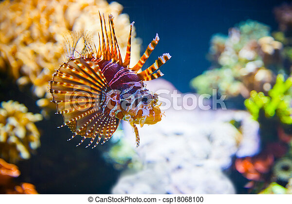 Colorful tropical fish under water - csp18068100