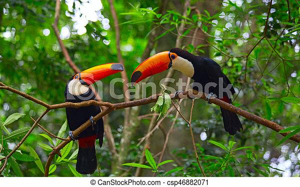 Colorful tucan - csp46882071