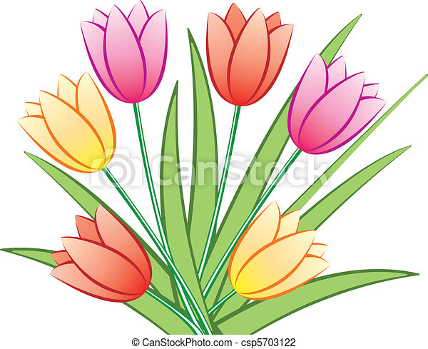 colorful tulips - csp5703122
