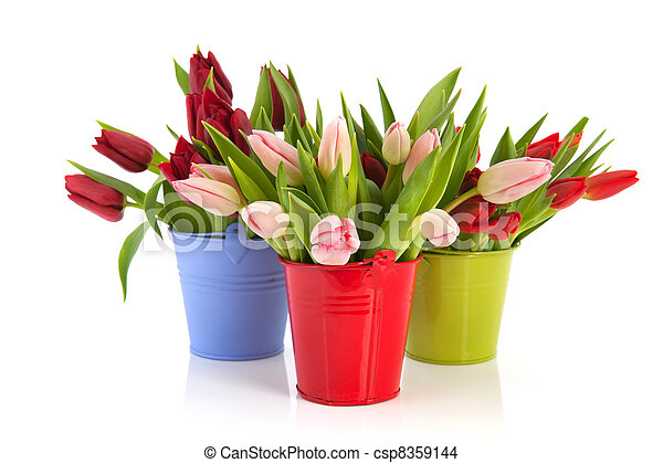 Colorful tulips in buckets - csp8359144