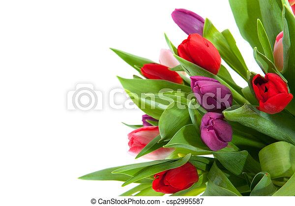 Colorful tulips in corner - csp2995587