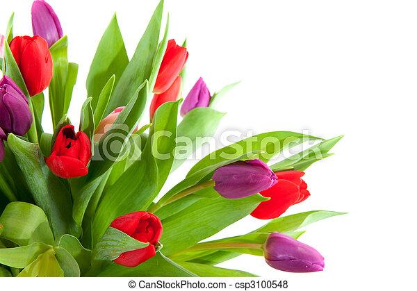 Colorful tulips in corner - csp3100548