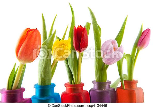 Colorful tulips in vases - csp4134446