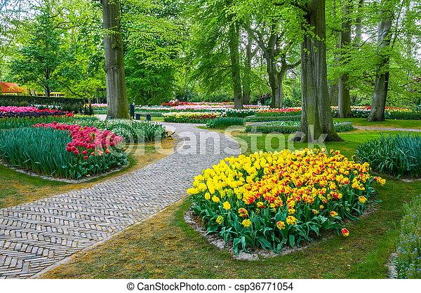 Colorful tulips, Keukenhof Park, Lisse in Holland - csp36771054