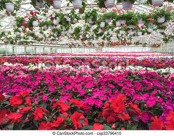 Colorful variety of flowers in a garden center - csp33796410