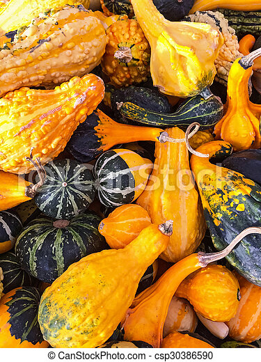 Colorful variety of gourds and squashes - csp30386590