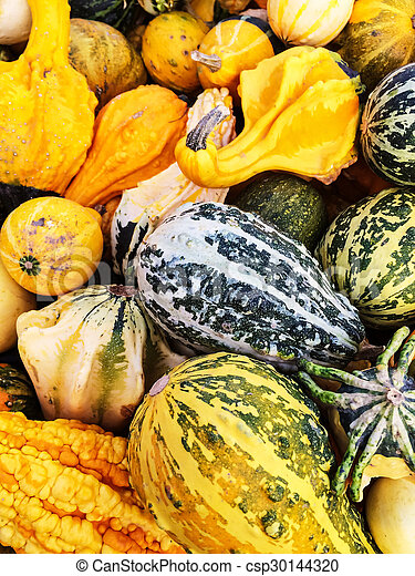 Colorful variety of gourds at the market - csp30144320