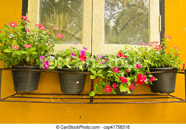 Colorful Vinca Flower In Pots A Wooden Window Box Filled With