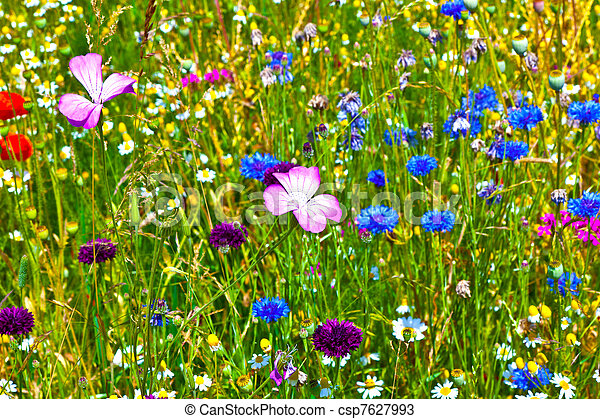 colorful wildflowers in the meadow - csp7627993