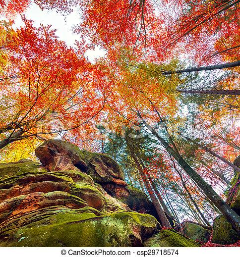 Colorido árboles Bosque De Otoño Vista Hacia Arriba