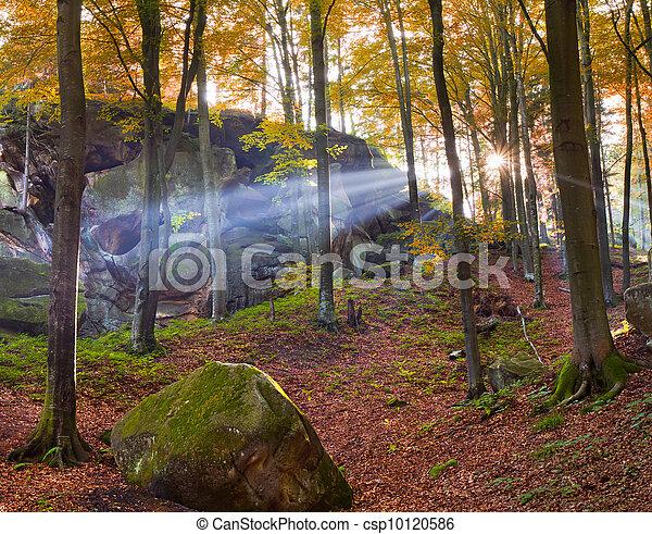 Colorido bosque de otoño por la mañana - csp10120586