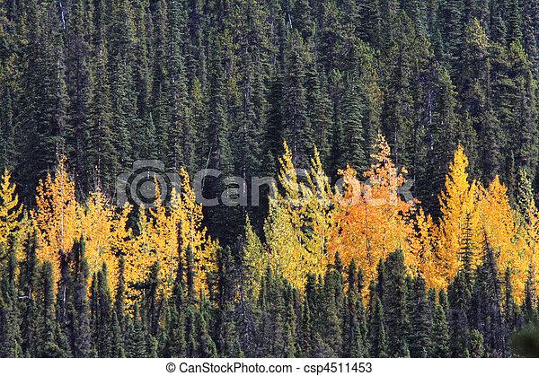 Bosque colorido en Columbia Británica - csp4511453