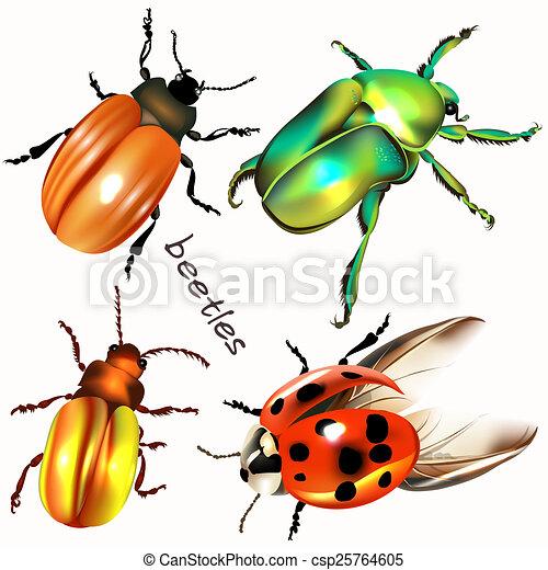 Colorido, escarabajos, colección, realista, vector, diseño ...