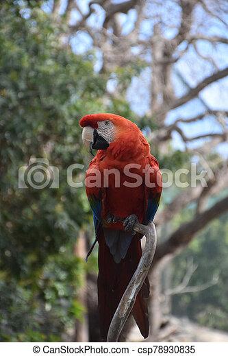 colorido, pájaro, rama de árbol, encantador, papagallo - csp78930835