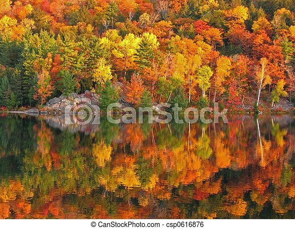 coloridos, outono - csp0616876