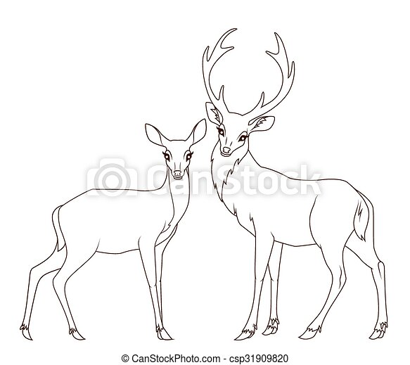 Coloring book: Couple of deers isolated - csp31909820