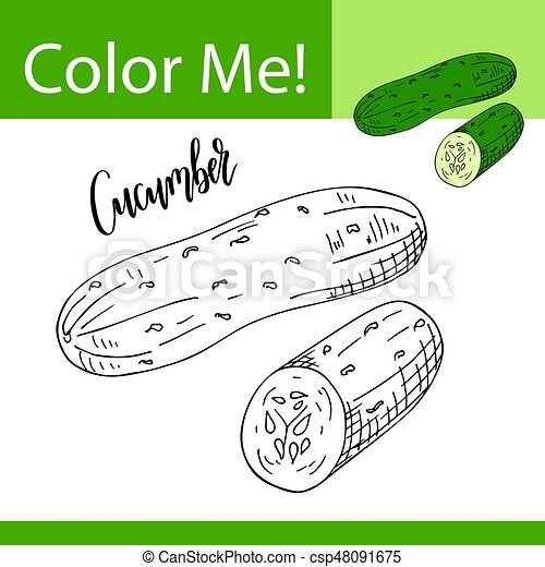 Coloring book or page of vegetable. Vector illustration with hand drawn  cucumber.