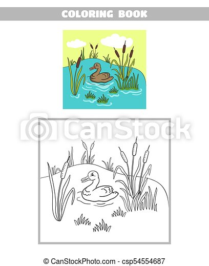 Coloring Book Pond Duck