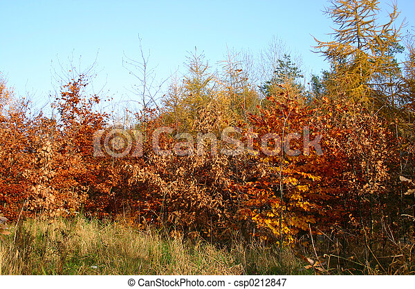 colors of fall - csp0212847