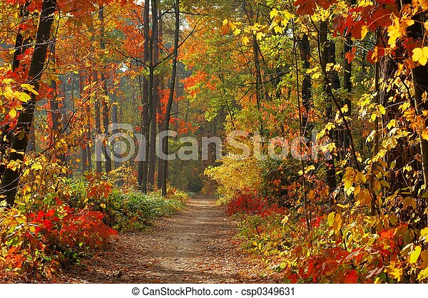 Colors of Fall - csp0349631