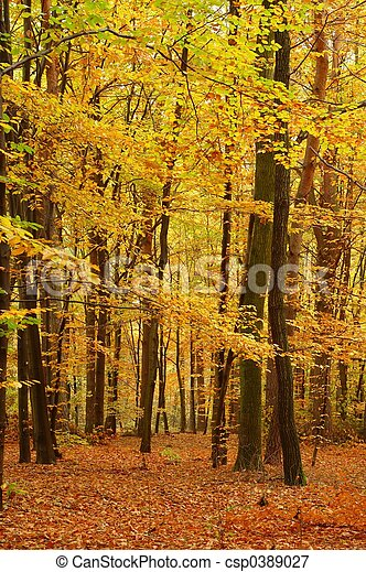 Colors of Fall - csp0389027