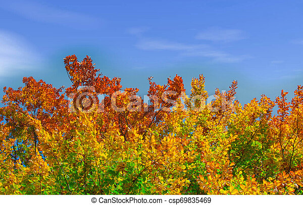 Colors of Fall - csp69835469