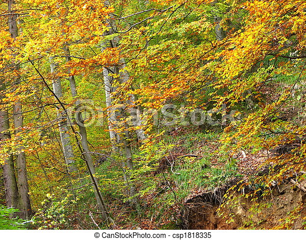 colors of fall - csp1818335