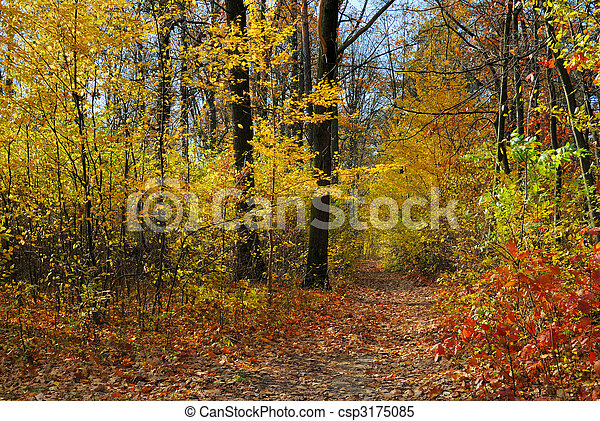 Colors of Fall - csp3175085