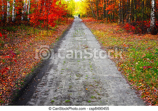 Colors of fall - csp8490455