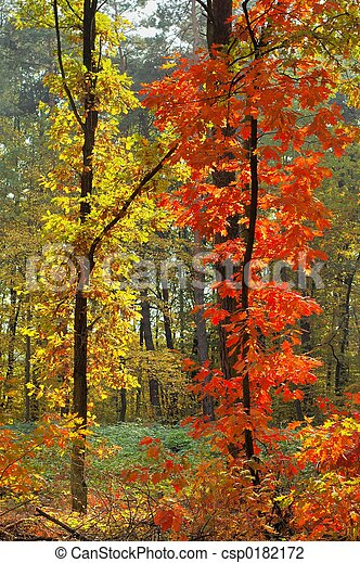 Colors of Fall - csp0182172