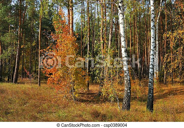 Colors of Fall - csp0389004