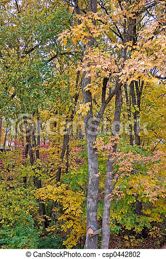 Colors of fall - csp0442802