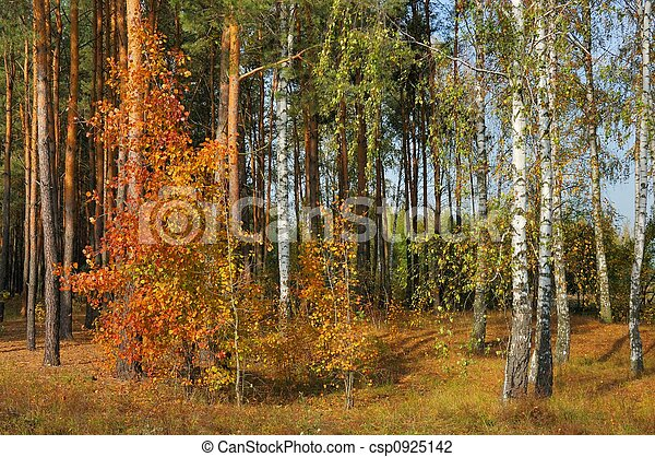 Colors of Fall - csp0925142
