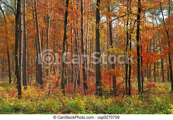 Colors of Fall - csp0270709