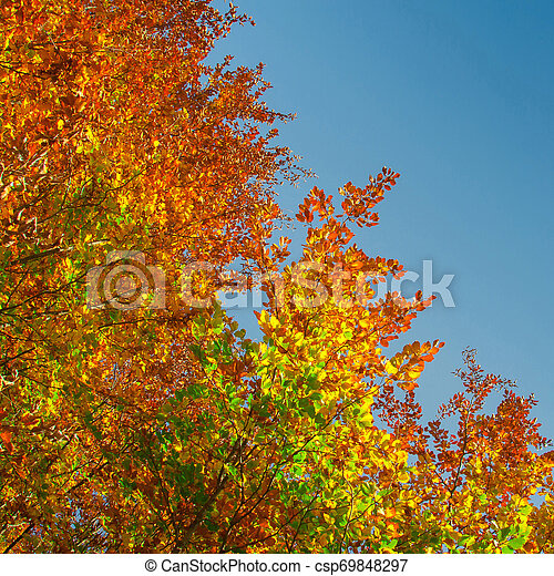 Colors of Fall - csp69848297