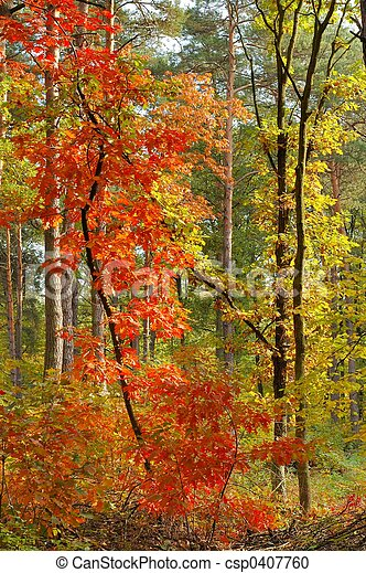 Colors of Fall - csp0407760